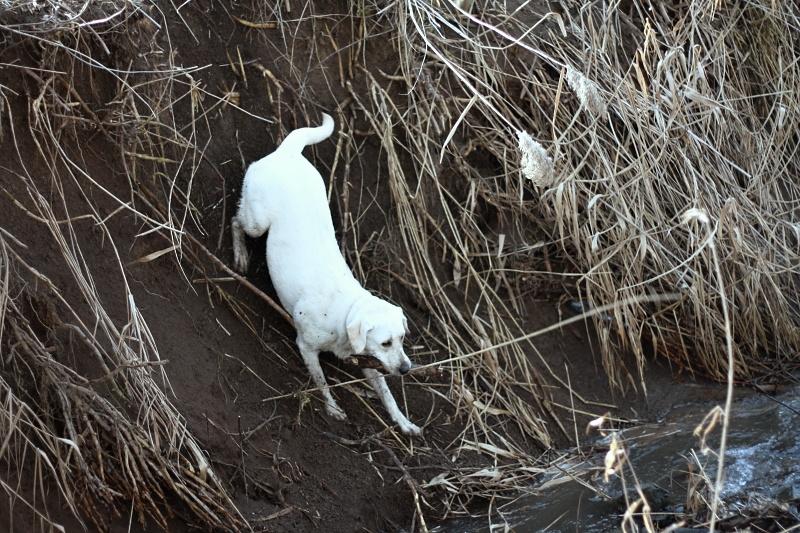 Labrador a voda – radost i starost